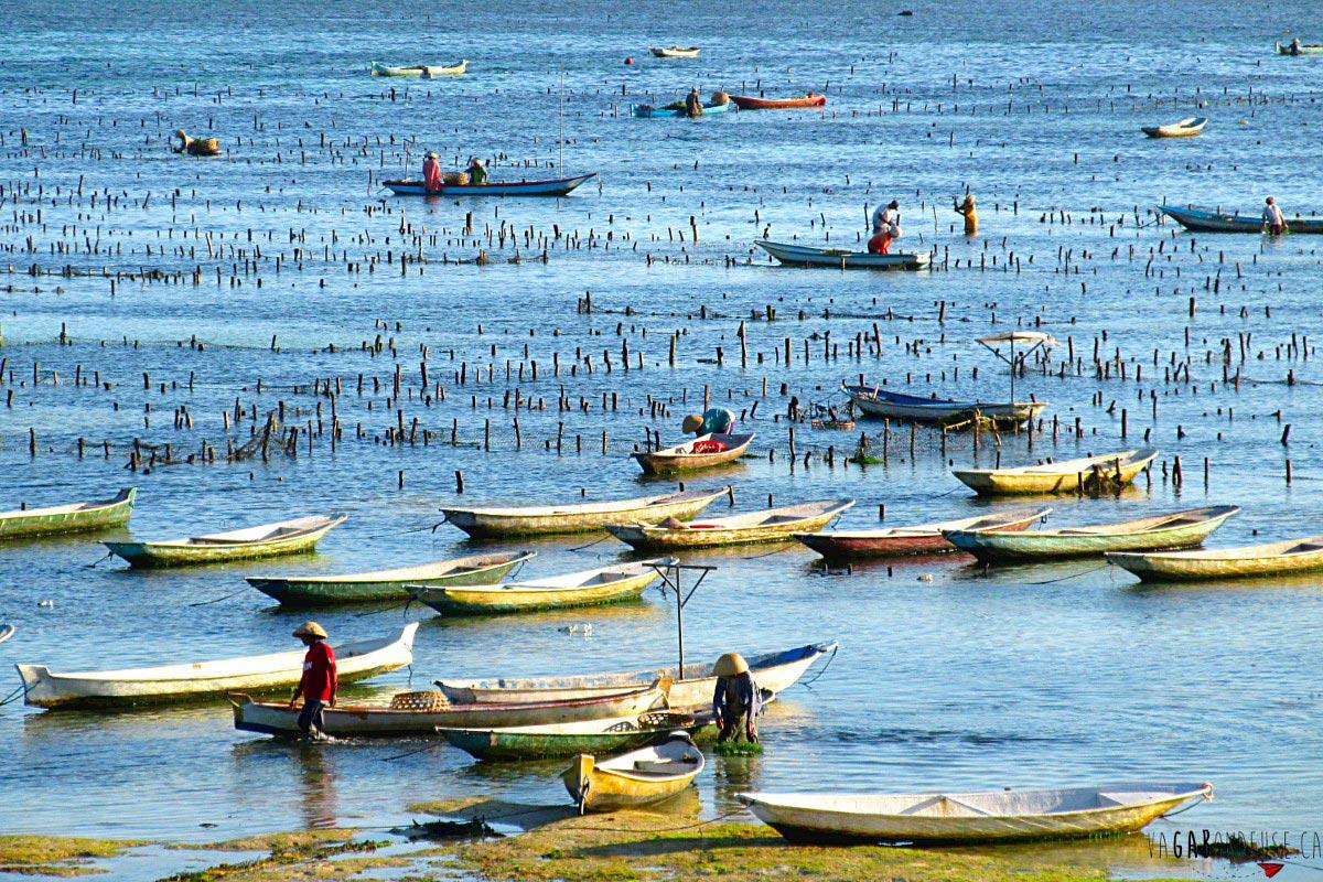Refuse to hibernate Vagabondeuse culture algues Nusa Lembongan Indonésie