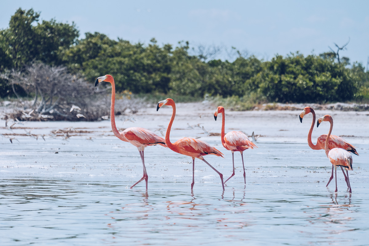Refuse to hibernate yucatan rio lagartos flamants roses