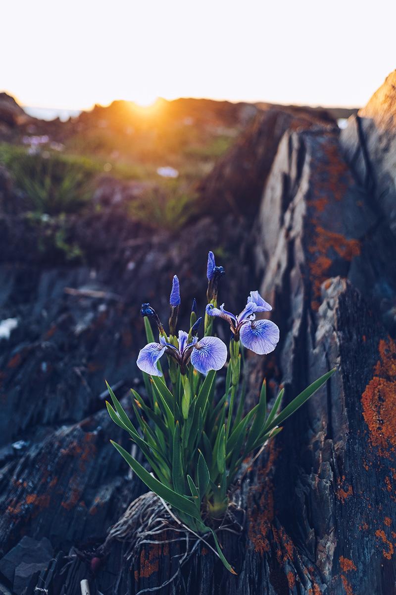 Refuse to hibernate domaine floravie fleur de lys
