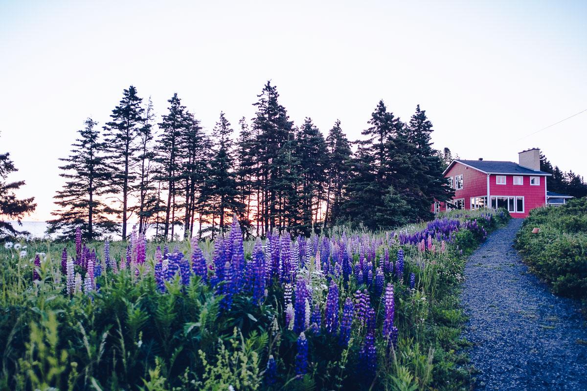 Refuse to hibernate domaine floravie logement cabines avec lupins
