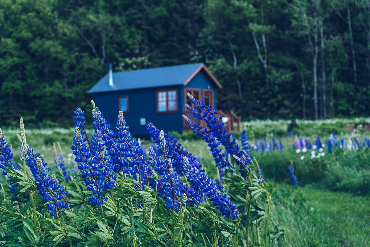 Refuse to hibernate domaine floravie tiny house bleue
