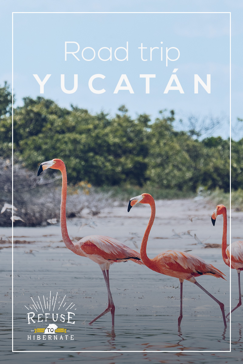 Refuse to hibernate road trip Yucatan