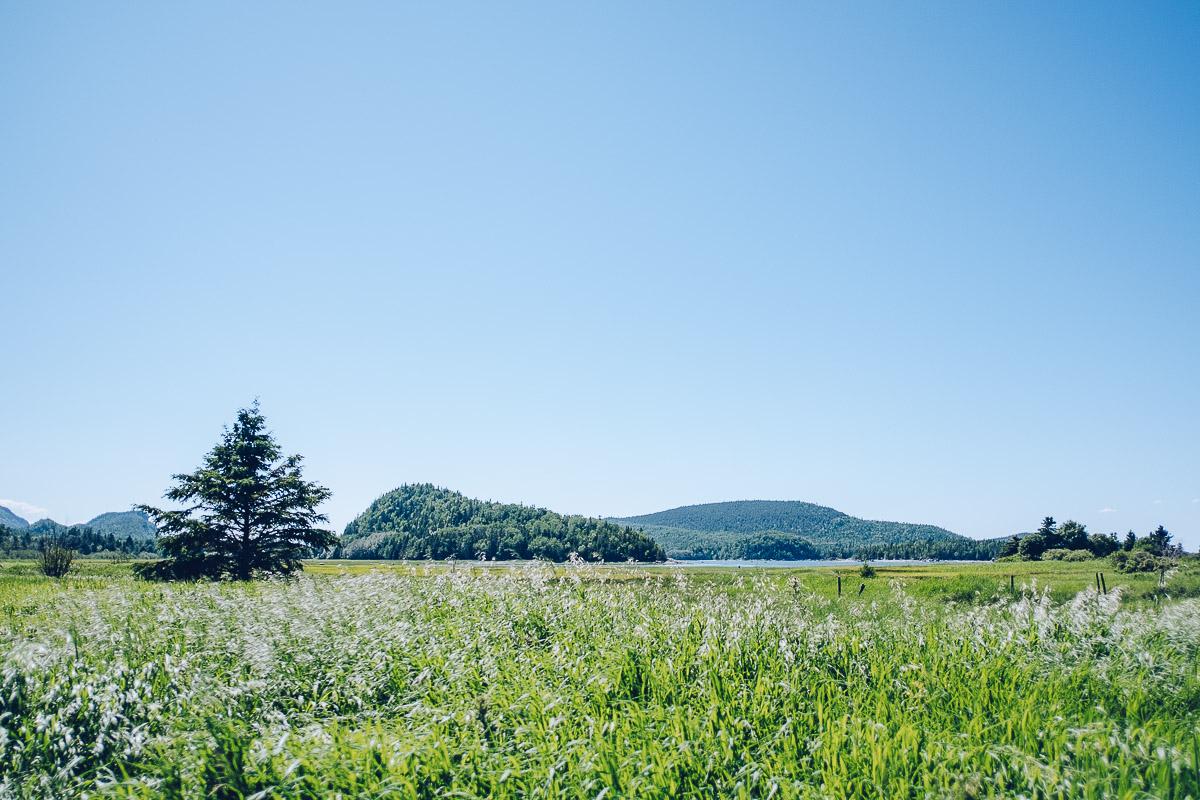 Refuse to hibernate bas saint laurent parc national bic pointe aux epinettes