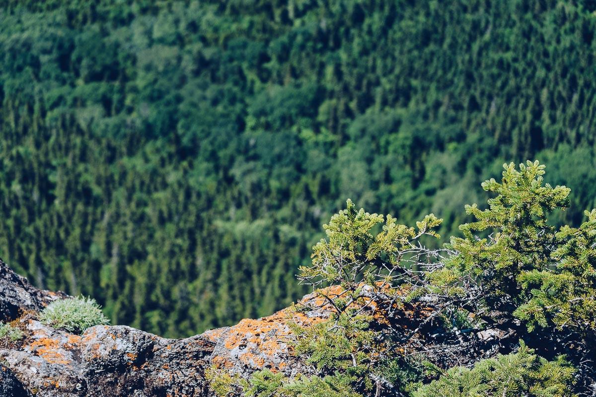 Refuse to hibernate bas saint laurent parc national bic vue pic champlain foret