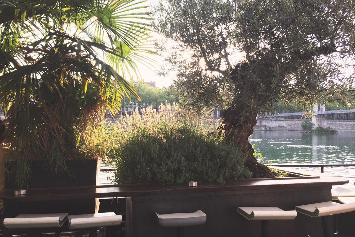 La Barge palmiers