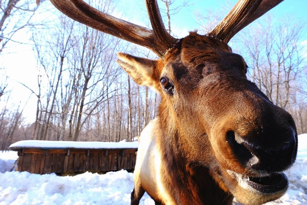 Visiter le Parc Oméga en hiver