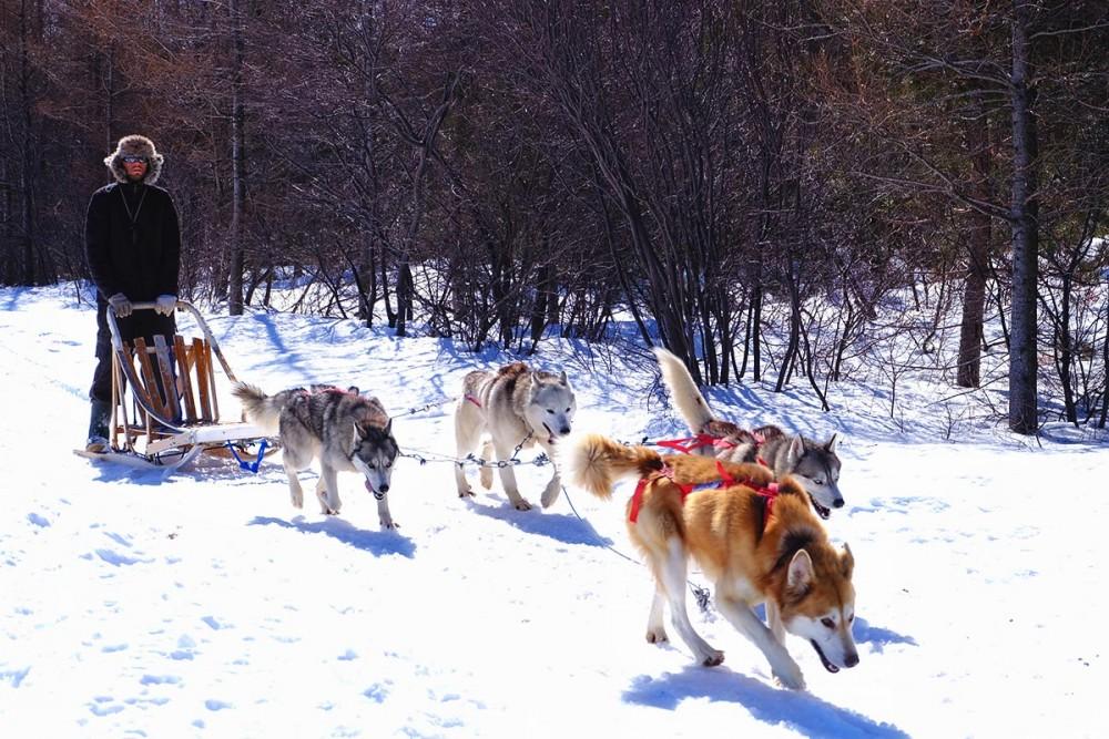 Où faire du chien de traineau et de la motoneige vers Québec ?