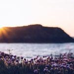 Refuse to hibernate saint-malo coucher de soleil fleuri