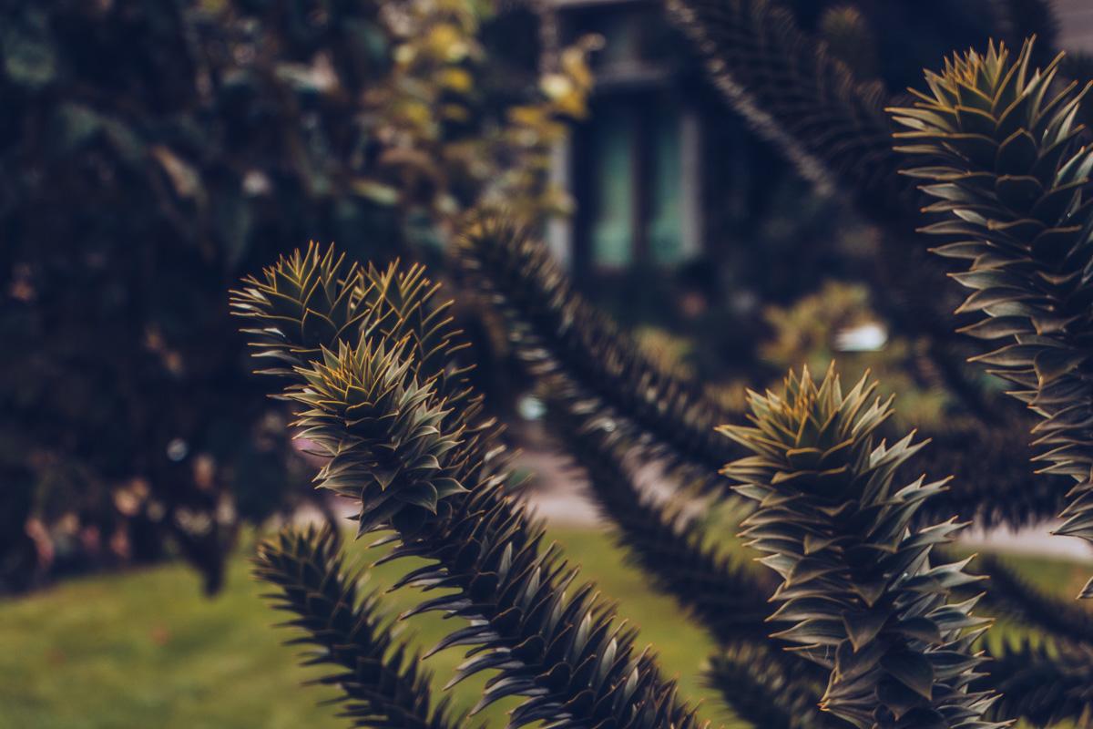 Refuse to hibernate Anvers jardin des plantes focus