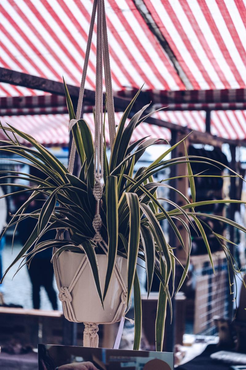 Refuse to hibernate Anvers marche plante