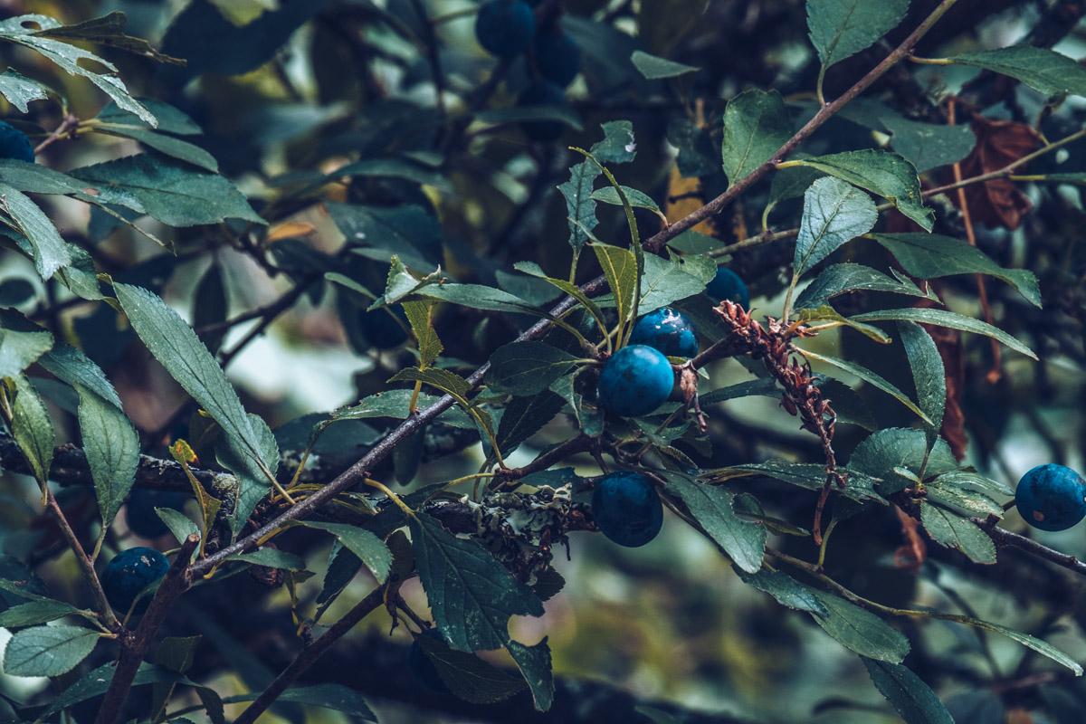 Refuse to hibernate nievre bec d'allier instant nature prunelles