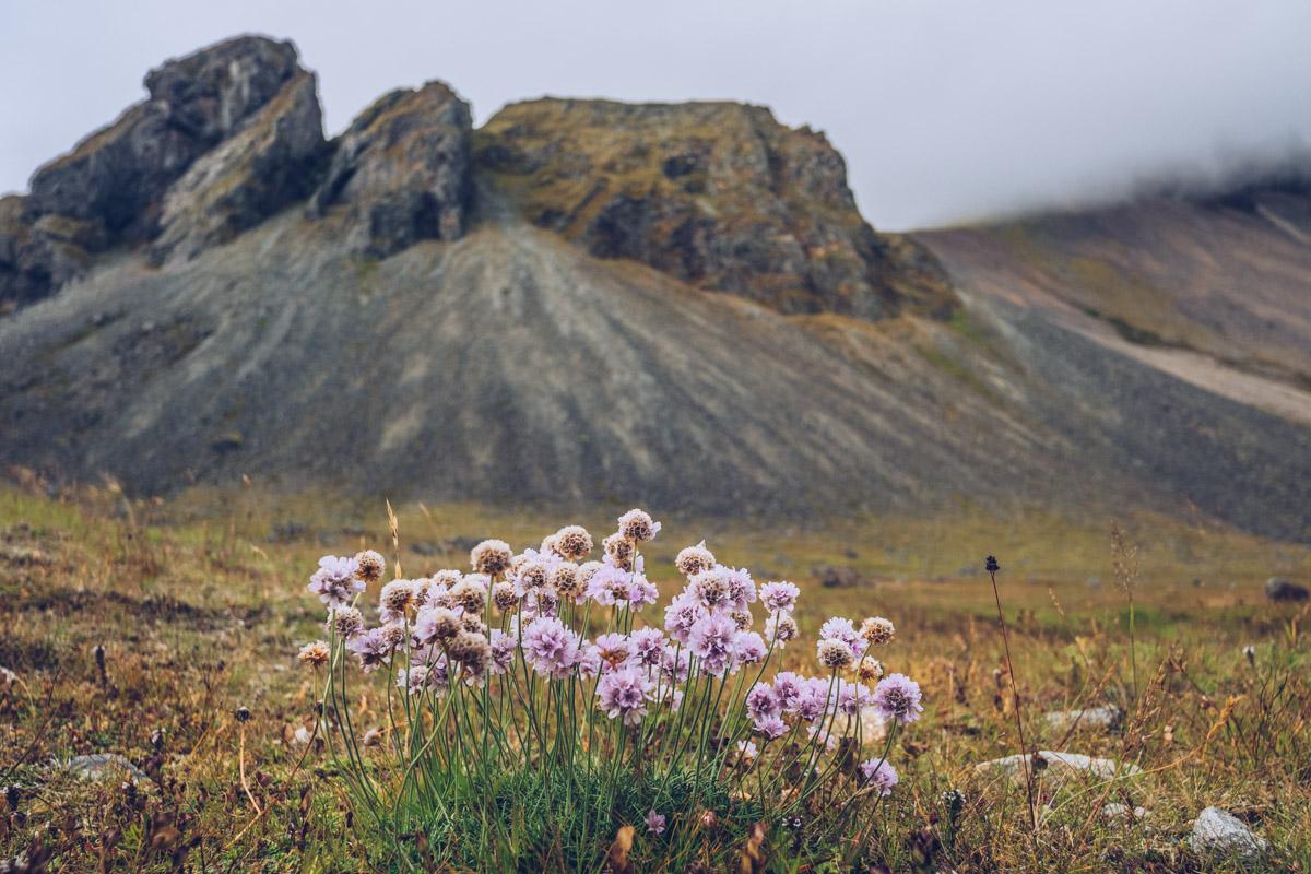 Refuse to hibernate islande stokksness fleurs