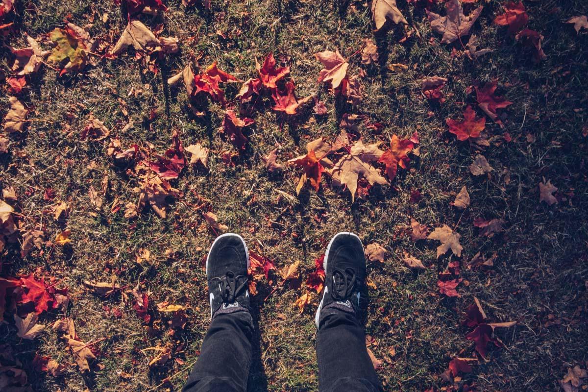 Refuse to hibernate Vancouver stanley park automne