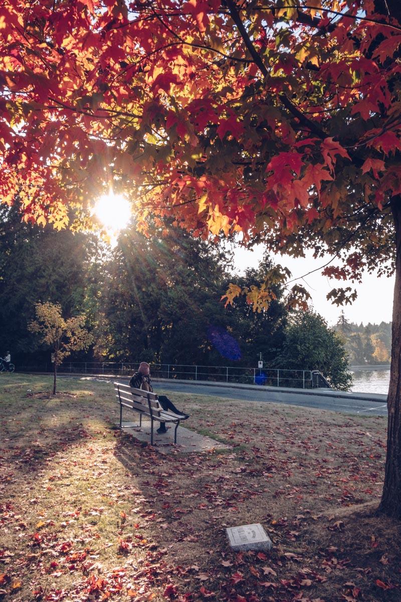 Refuse to hibernate Vancouver stanley park automne audrey