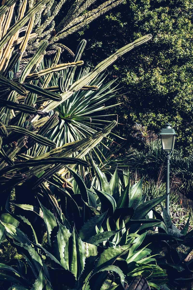 Refuse to hibernate Lisbonne jardim da estrela cactus 2