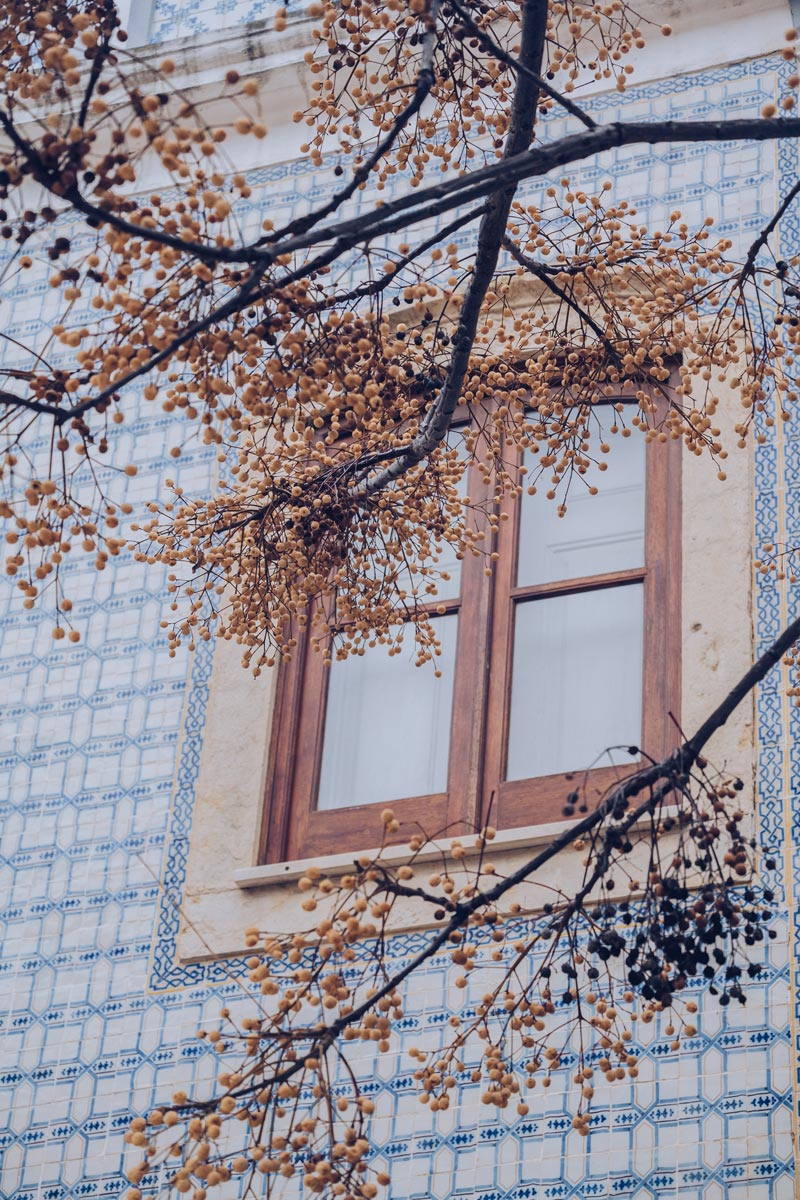 Refuse to hibernate Portugal lagos azulejos