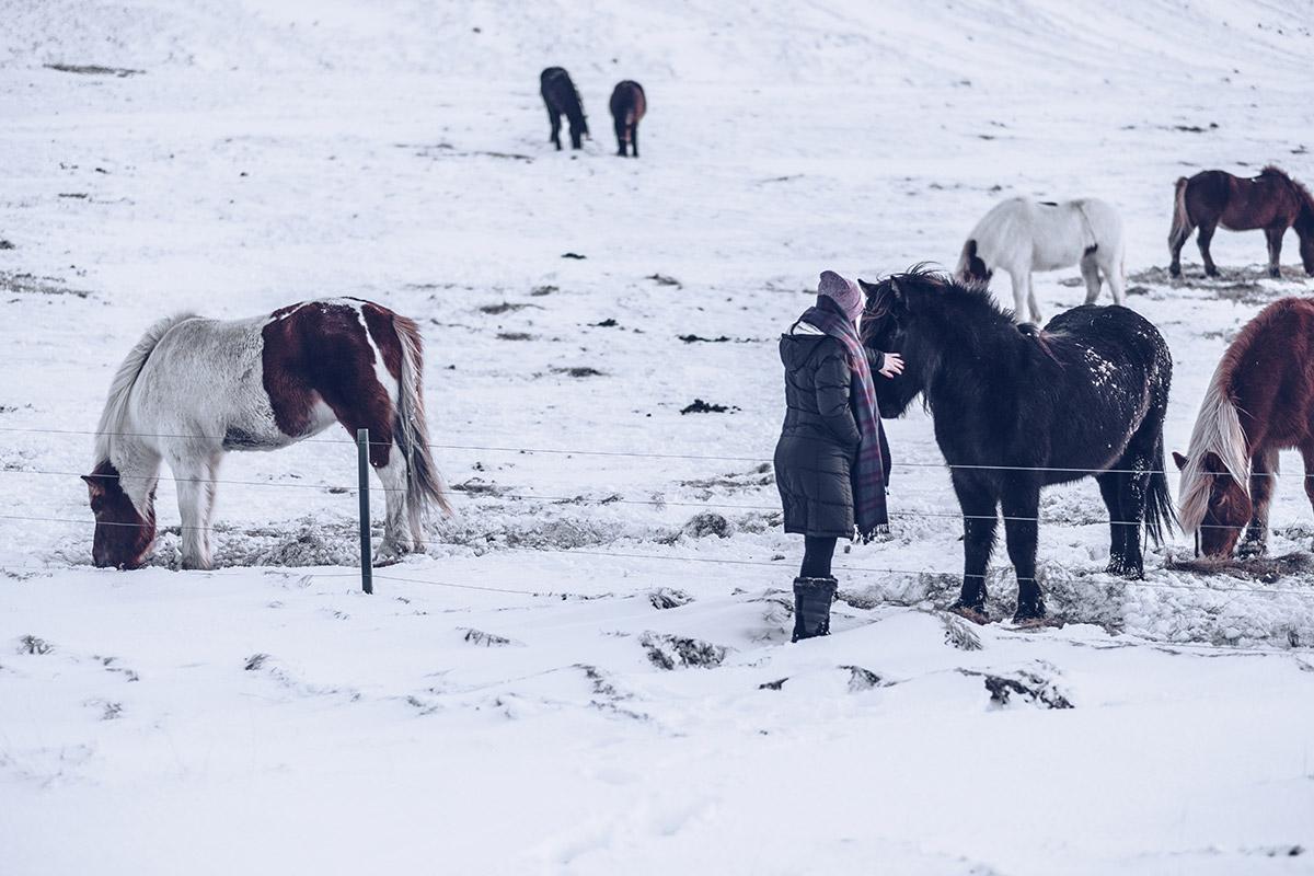 Refuse to hibernate Islande en hiver route 47 Audrey avec les chevaux