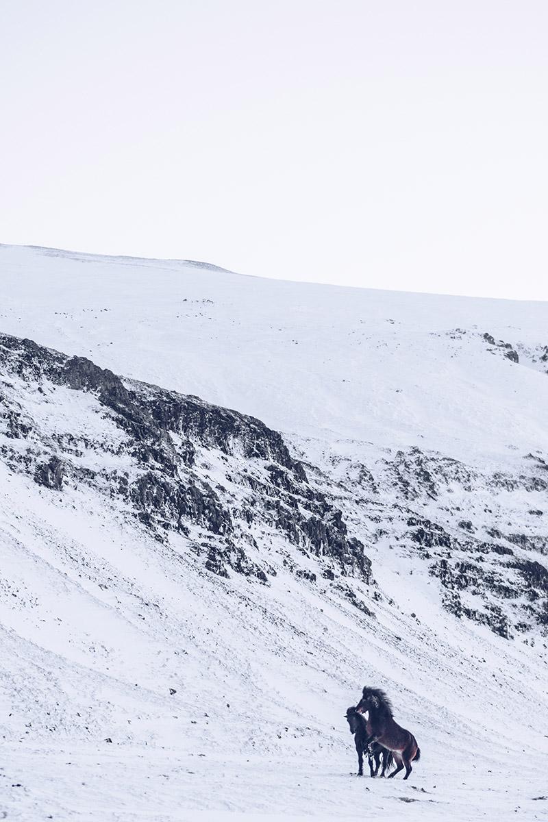 Refuse to hibernate Islande en hiver route 47 chevaux