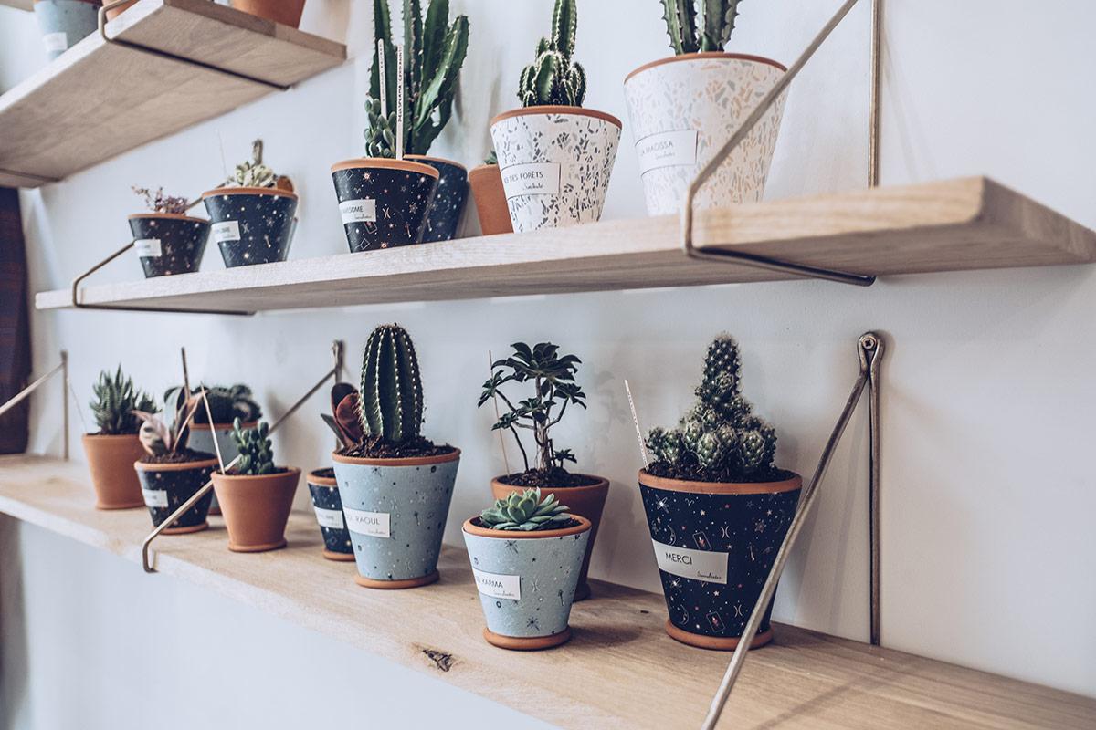 Refuse to hibernate Marseille les Succulentes café cactus étagère