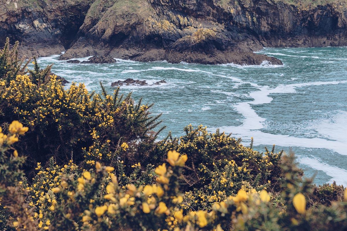 Refuse to hibernate Jersey Devil's Hole Audrey fleurs
