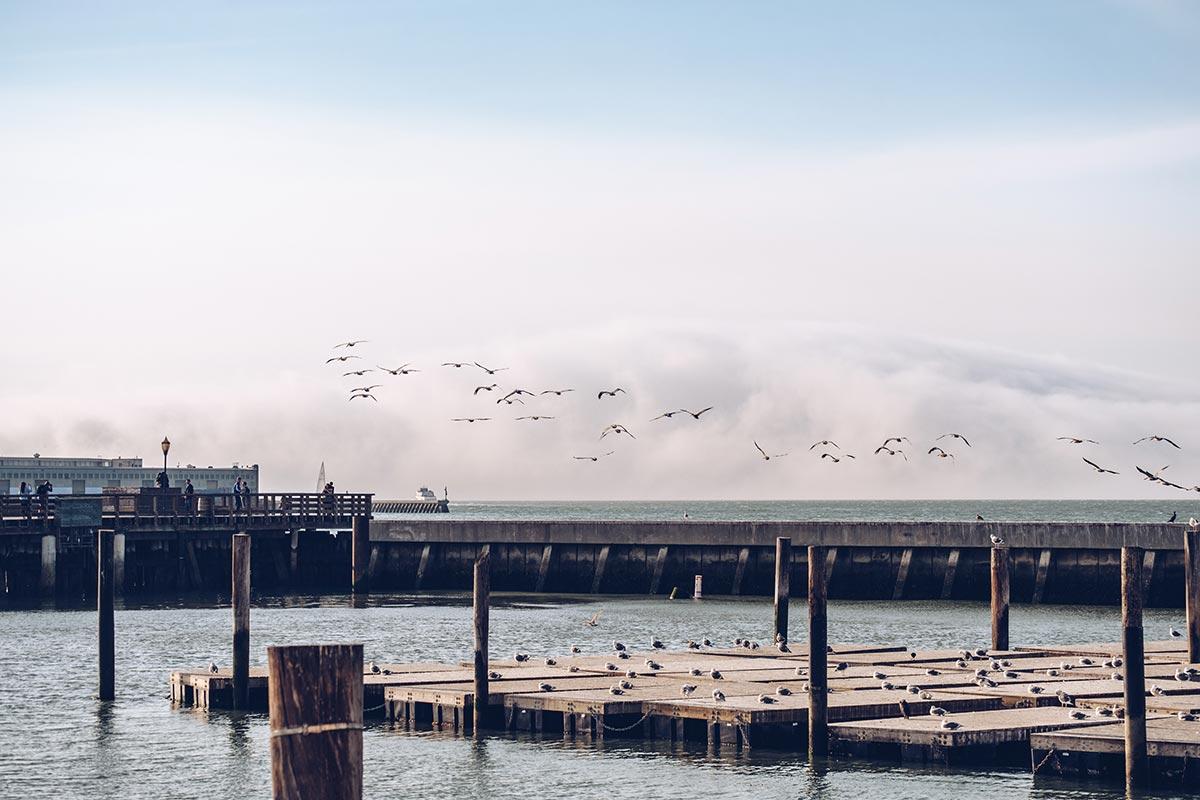 Refuse to hibernate San Francisco Pier 39 otaries oiseaux