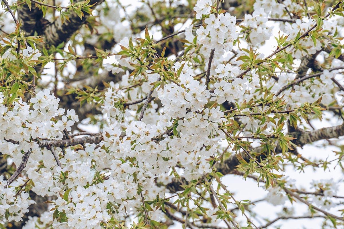 Refuse to hibernate Aveyron Montpellier-le-Vieux fleurs