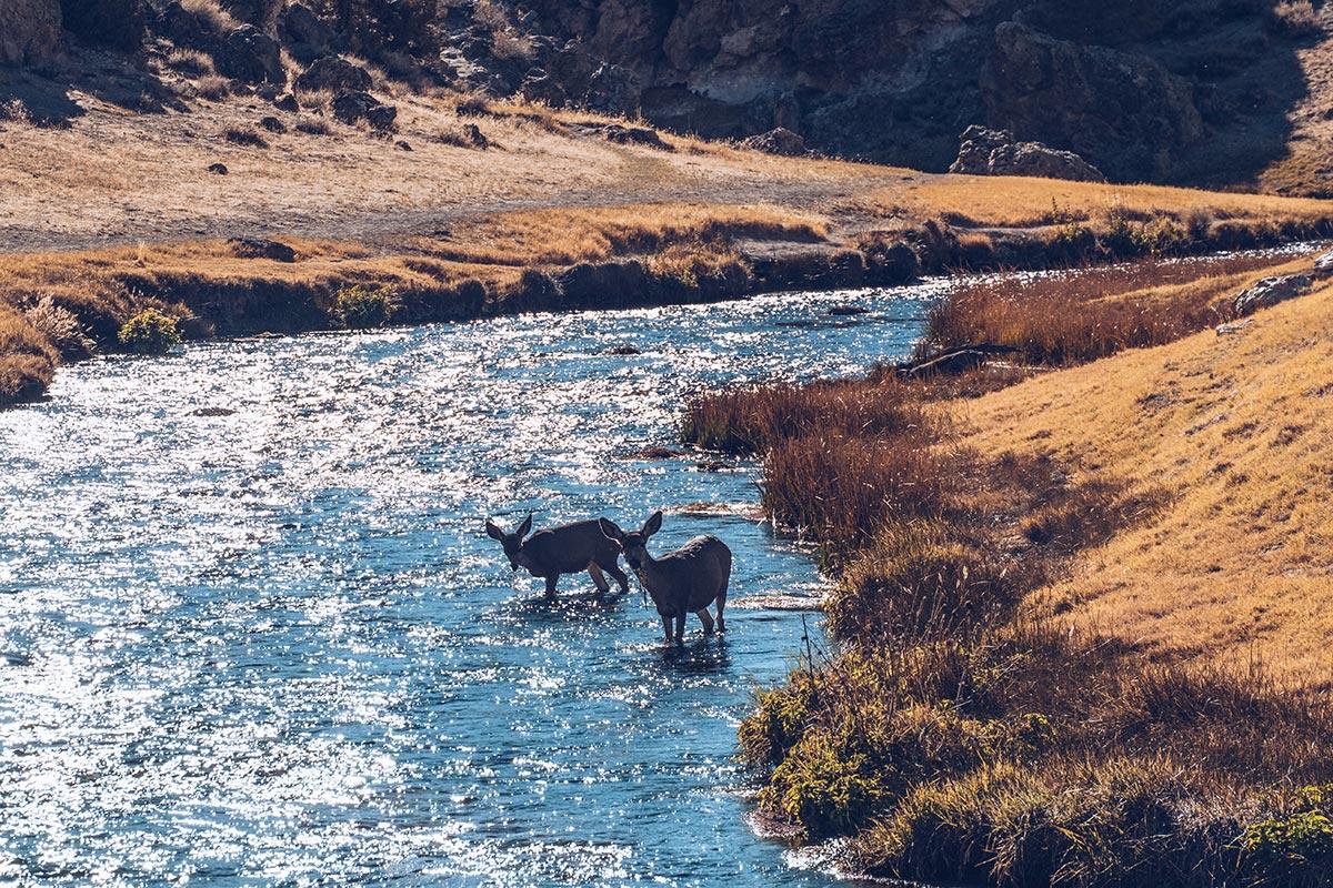 Refuse to hibernate Mammoth Lakes Hot Creek biches