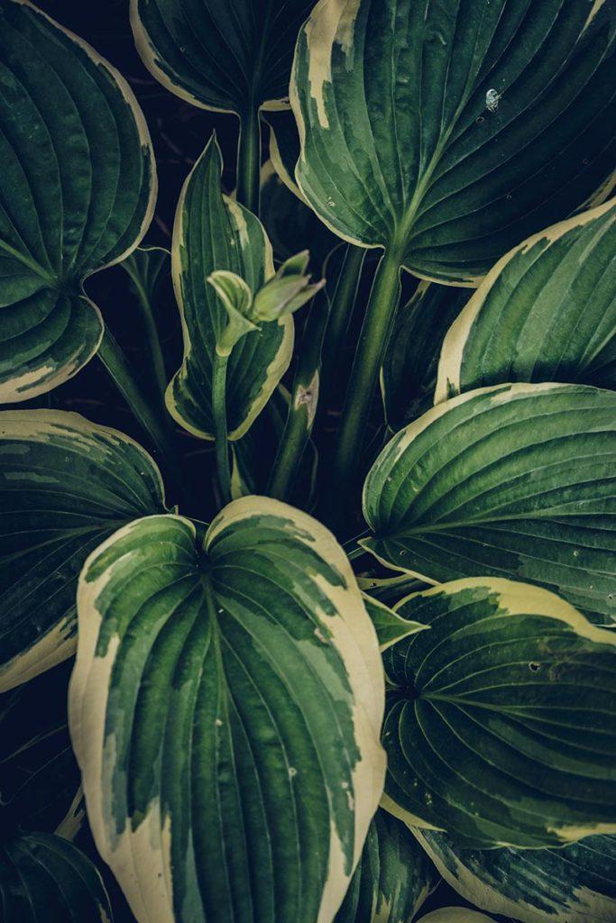 Refuse to hibernate Pays de Galles bodnant gardens feuilles