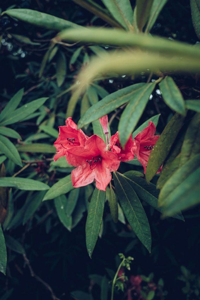 Refuse to hibernate Pays de Galles bodnant gardens fleurs