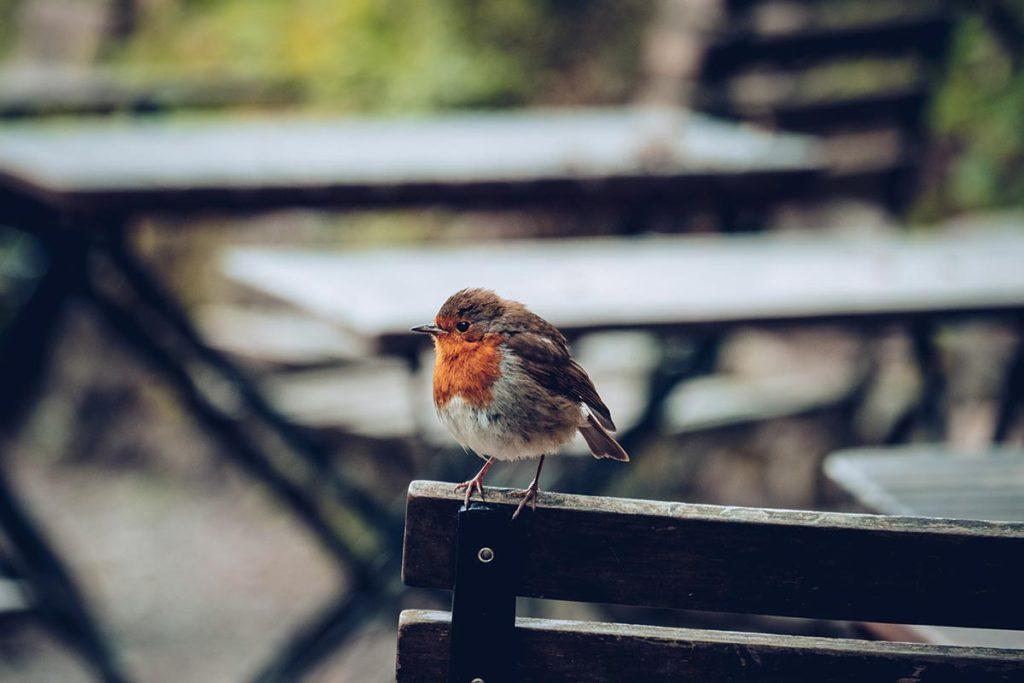 Refuse to hibernate Pays de Galles bodnant gardens oiseau