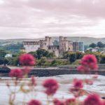 Refuse to hibernate Pays de Galles château de Conwy fleurs rouges