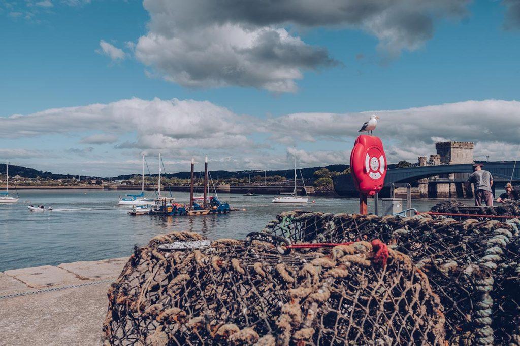 Refuse to hibernate Pays de Galles Conwy bateaux mouette