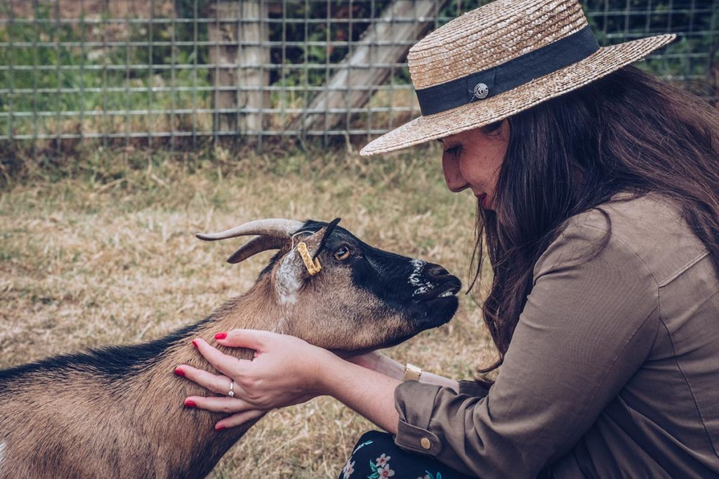 Refuse to hibernate Sancerre chèvrerie brissauderie Audrey chèvre