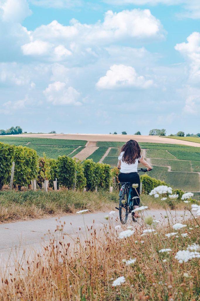 Refuse to hibernate Sancerre la Loire à vélo Audrey vignes