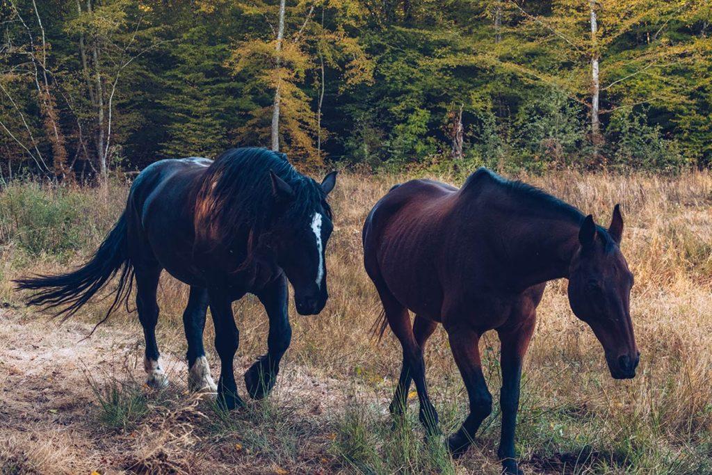 Eure-et-Loir domaine du Bois Landry chevaux Refuse to hibernate