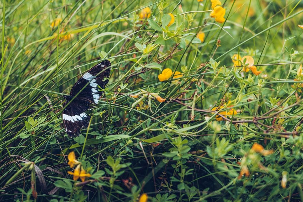 Refuse to hibernate Québec Parc national de Plaisance papillon