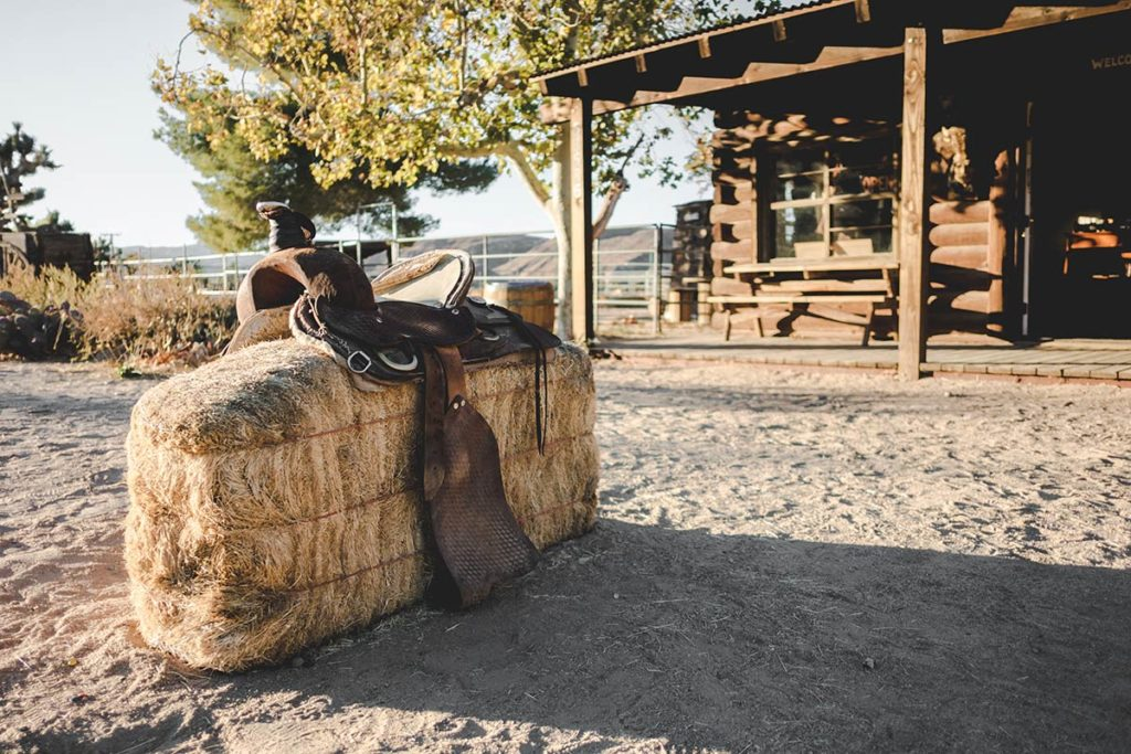Pioneertown selle de cheval Refuse to hibernate
