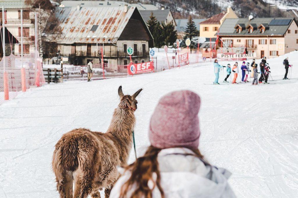Valloire refuse to hibernate balade avec des lamas Audrey et Tchupi