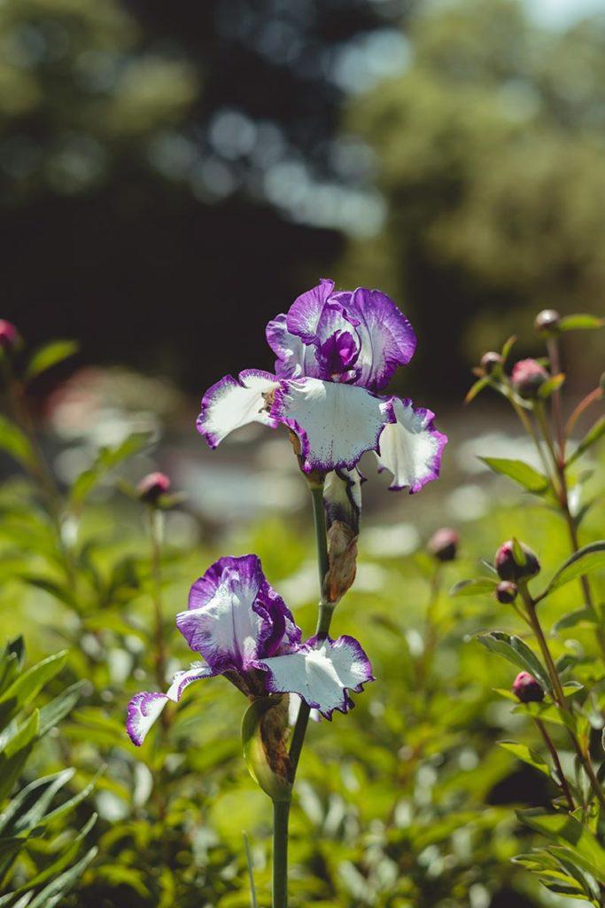 Châteaux de la Loire Cheverny jardin fleurs Refuse to hibernate