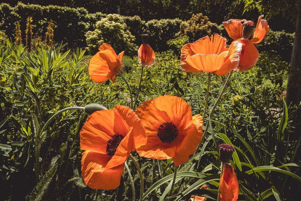 Châteaux de la Loire Villandry fleurs Refuse to hibernate