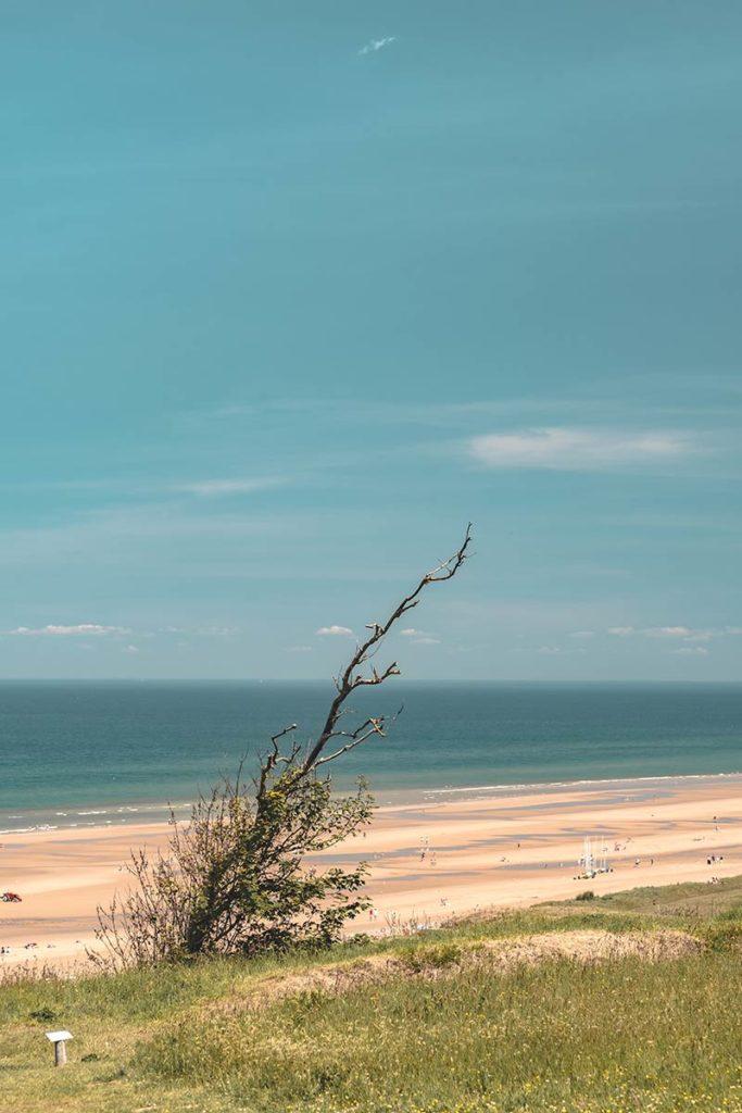 Débarquement Normandie Omaha Beach arbre plage Refuse to hibernate