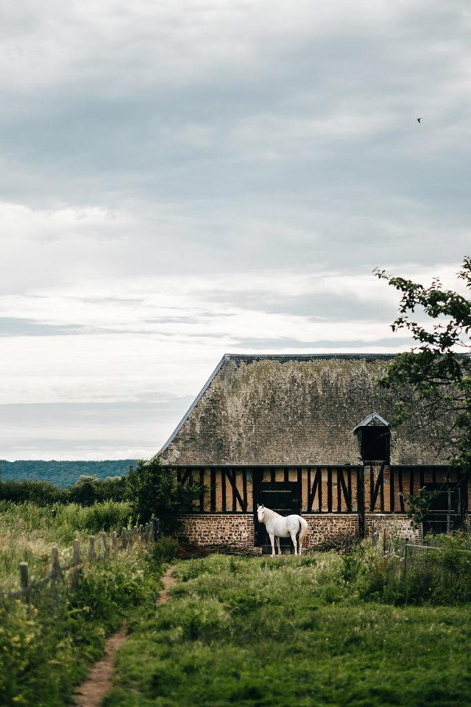Eure Marais Vernier cheval Refuse to hibernate