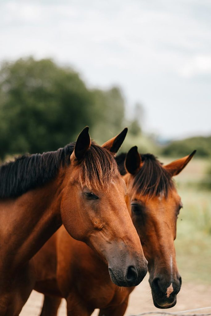 Eure Marais Vernier chevaux Refuse to hibernate