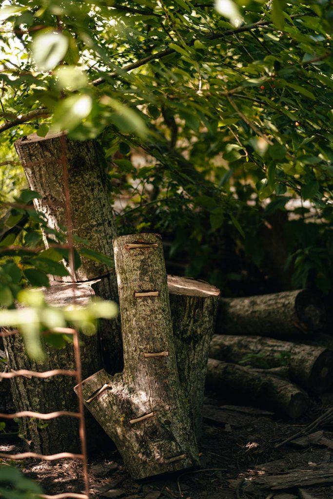 Eure Marais Vernier l'Escargotier arbre champignons Refuse to hibernate