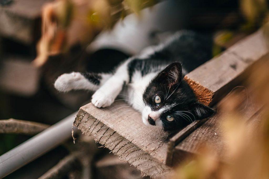 Eure Marais Vernier l'Escargotier chat Refuse to hibernate