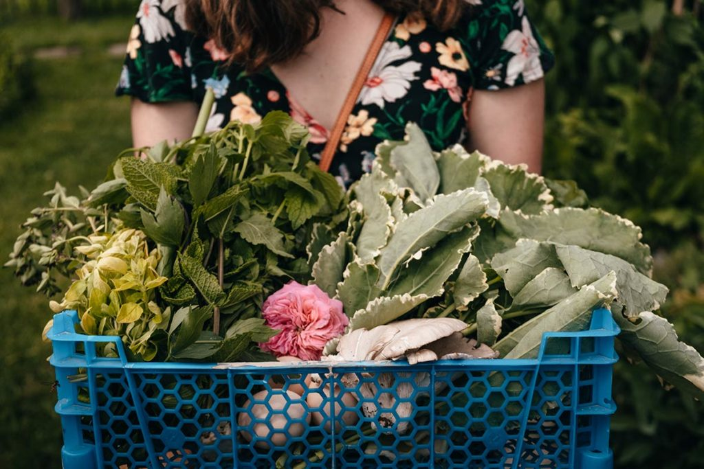 Eure Marais Vernier l'Escargotier panier légumes Refuse to hibernate
