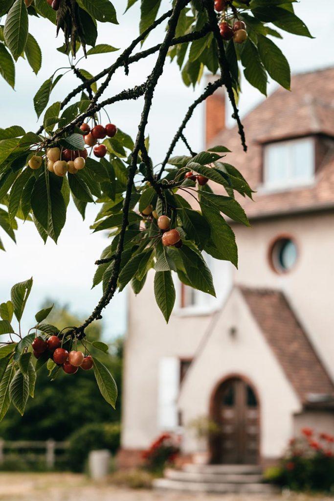 Eure Triqueville ferme du Ponctey cerises Refuse to hibernate