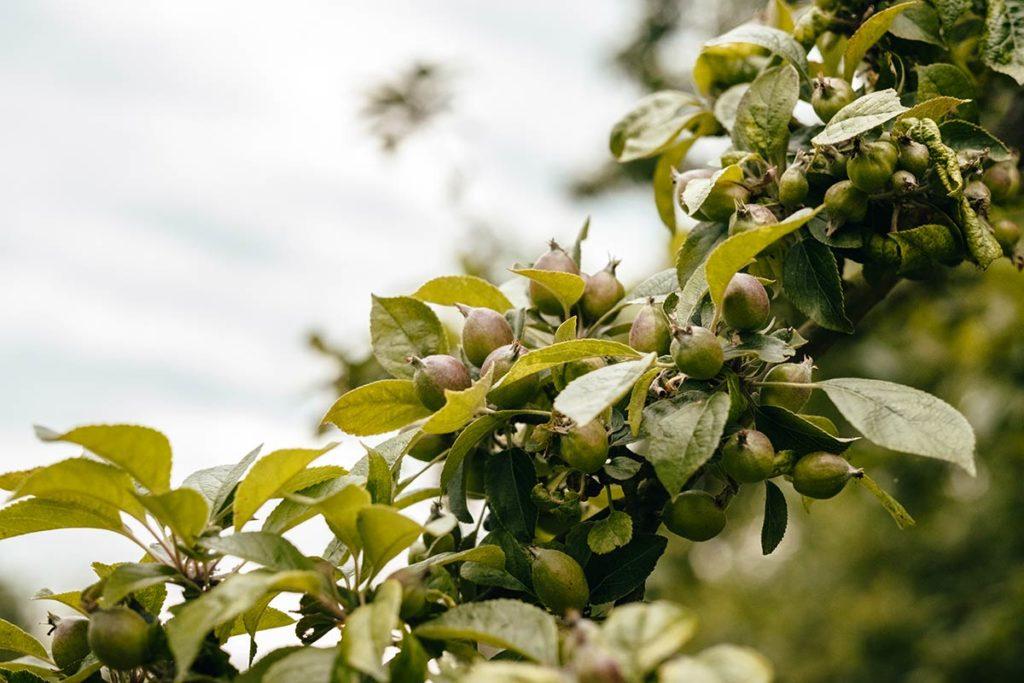 Eure Triqueville ferme du Ponctey pommes Refuse to hibernate