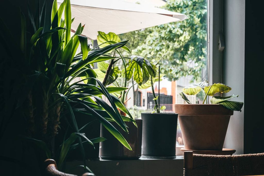 Oslo Grådi plante Refuse to hibernate
