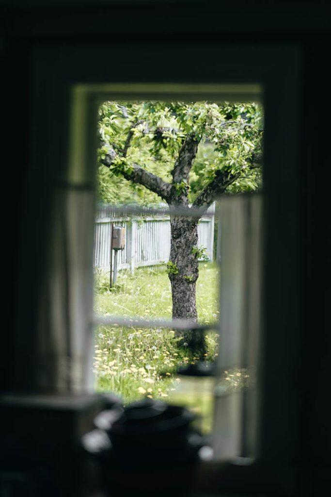 Oslo Musée Folklorique Norvégien arbre Refuse to hibernate